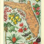 1912 Vintage Florida Illustrated Map   Colorful And Lovely | What   Vintage Florida Map