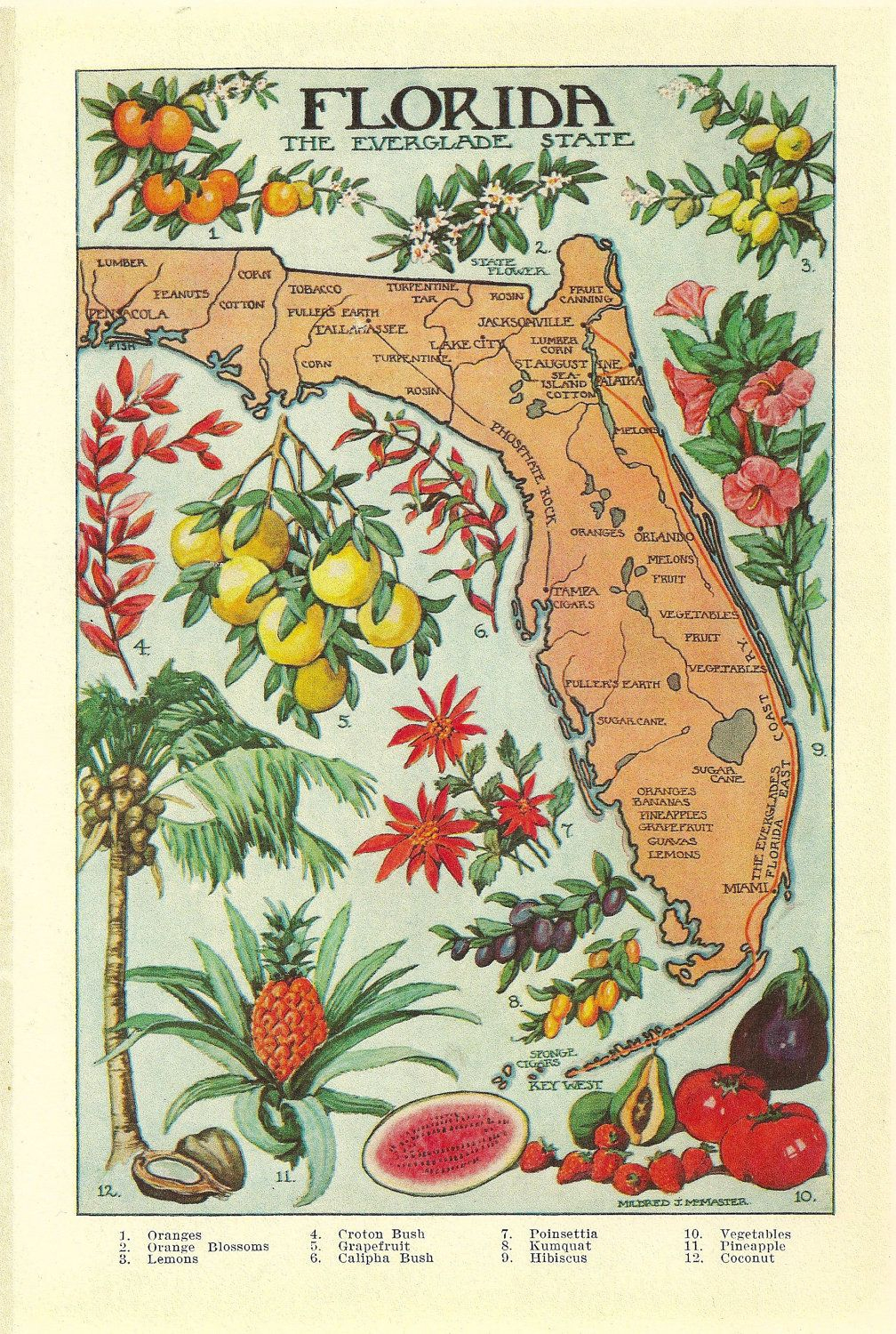 1912 Vintage Florida Illustrated Map - Colorful And Lovely | What - Vintage Florida Map