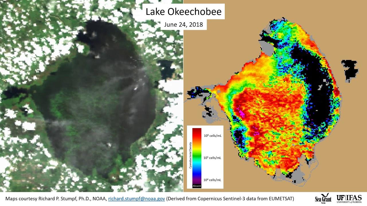 2018 Algae Bloom In Lake Okeechobee-7/18/2018 - Youtube - Toxic Algae In Florida Map