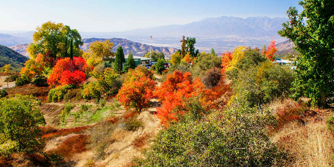 Best Places For California Autumn Leaves | Visit California - California Fall Color Map
