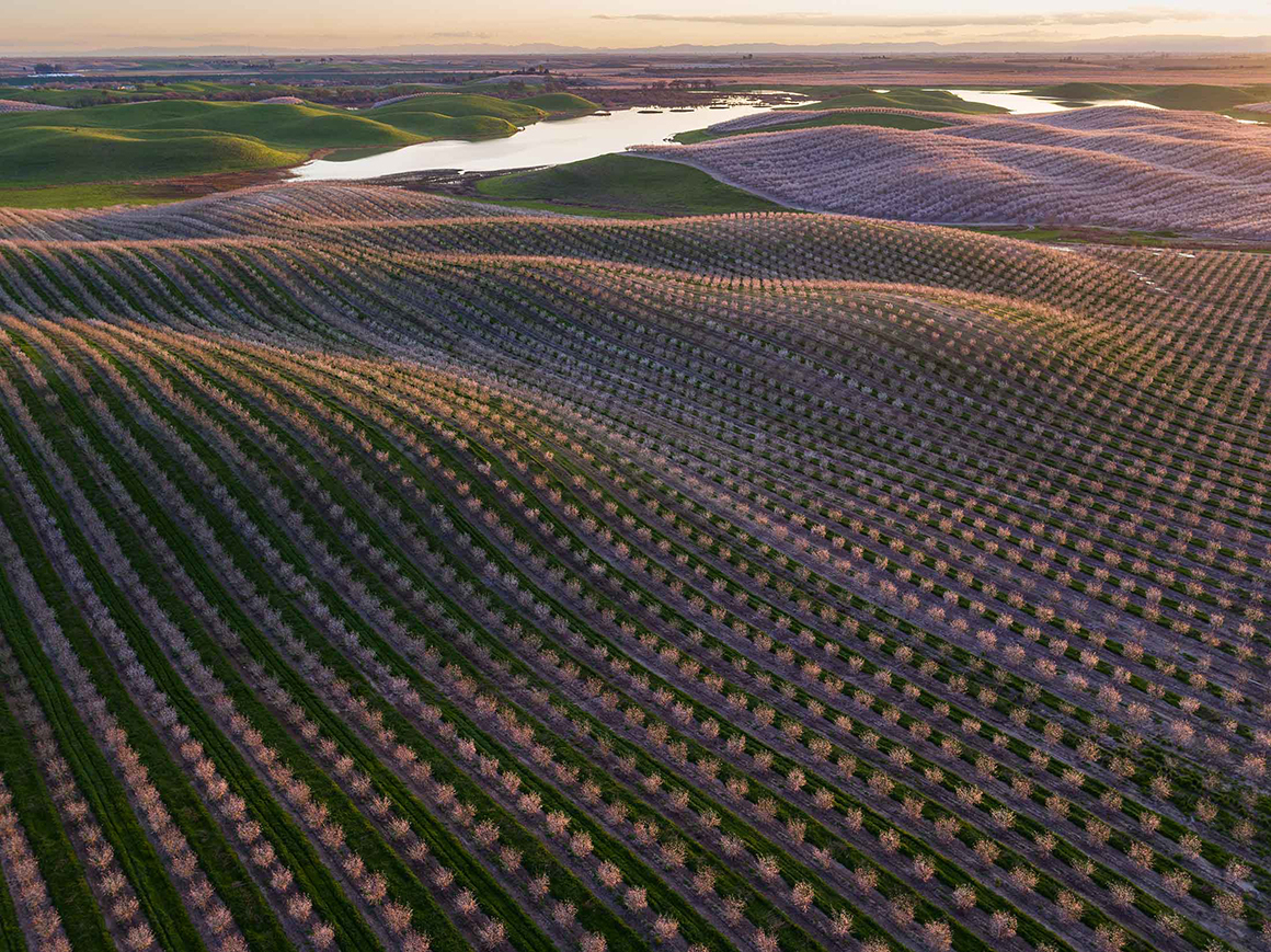 California Almonds Are Back After Four Years Of Brutal Drought - California Almond Farms Map