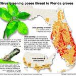 Citrus Greening: Florida's Bittersweet Harvest   Extra   Florida Orange Groves Map