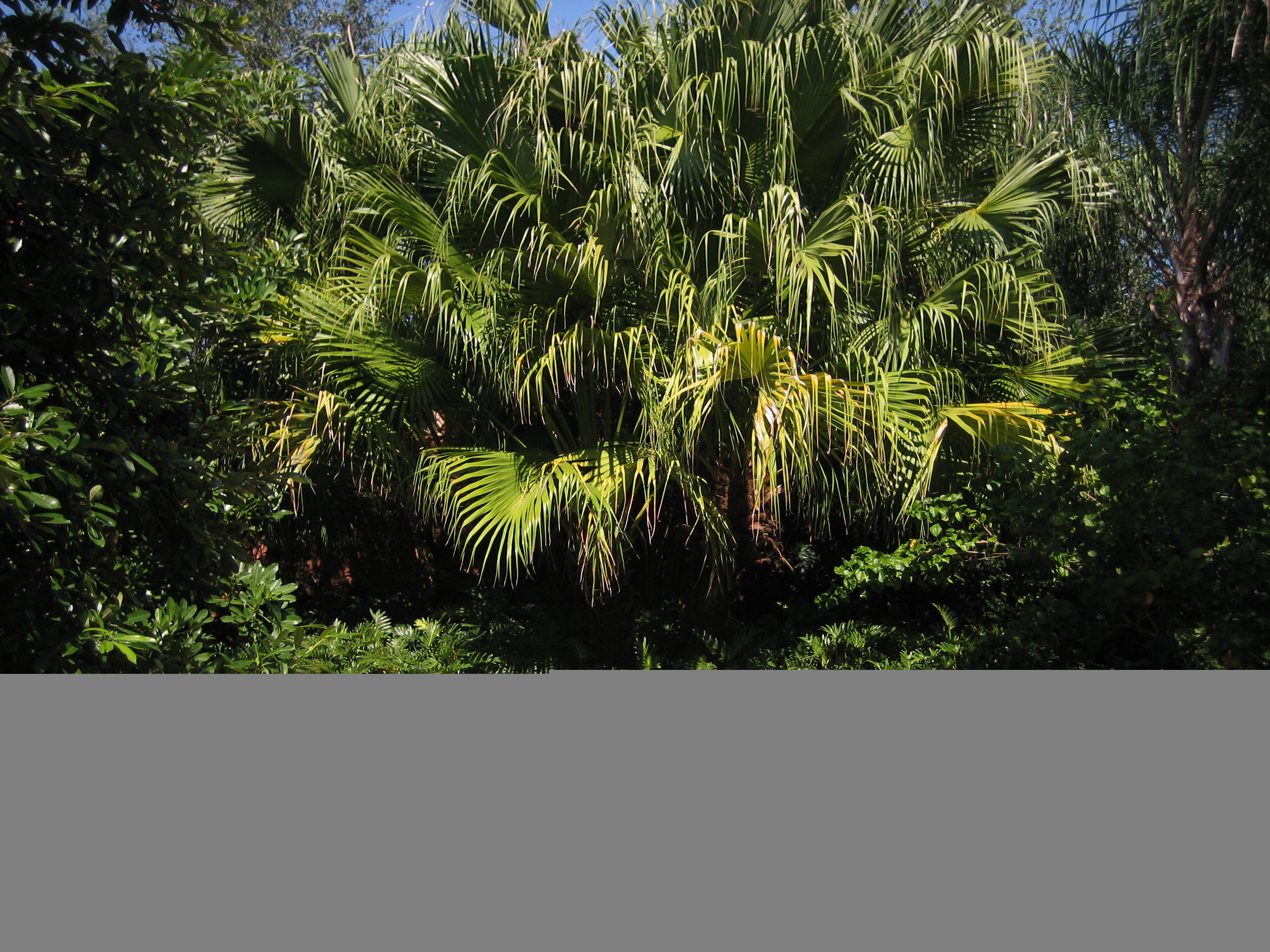 Florida Botanical Gardens | Florida Hikes! - Florida Botanical Gardens Tourist Map