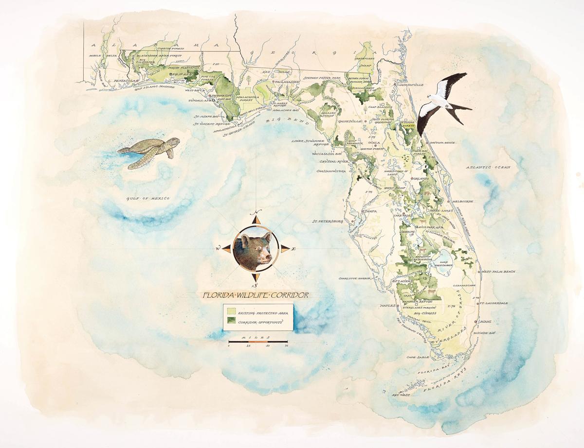 Florida Wildlife Corridor Expedition Watercolor Map Print - Watercolor Florida Map