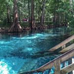 Ginnie Springs In High Springs, Florida | Travel Usa   Natural Springs Florida Map