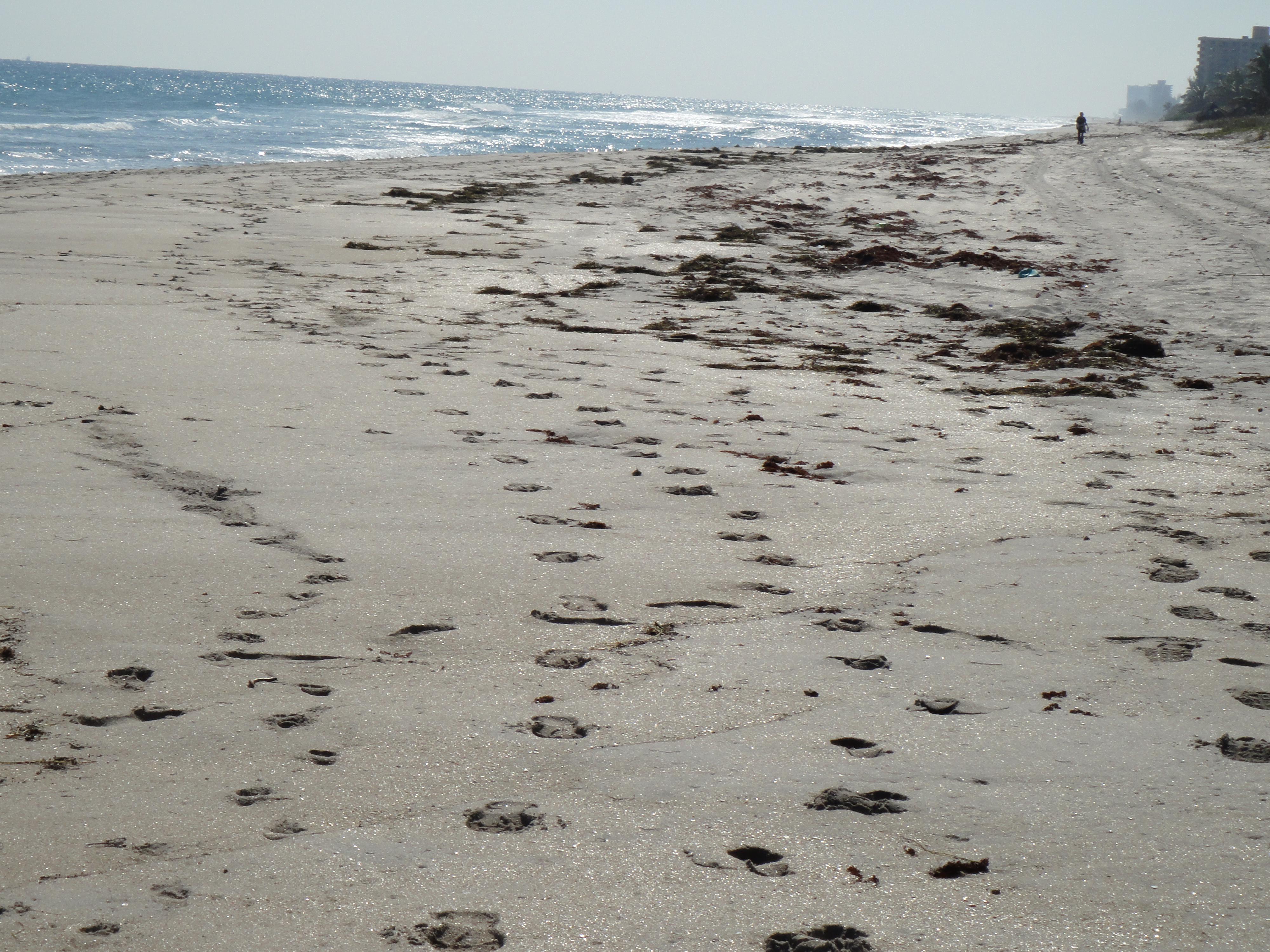 Highland Beach, Florida - Wikipedia - Highland Beach Florida Map