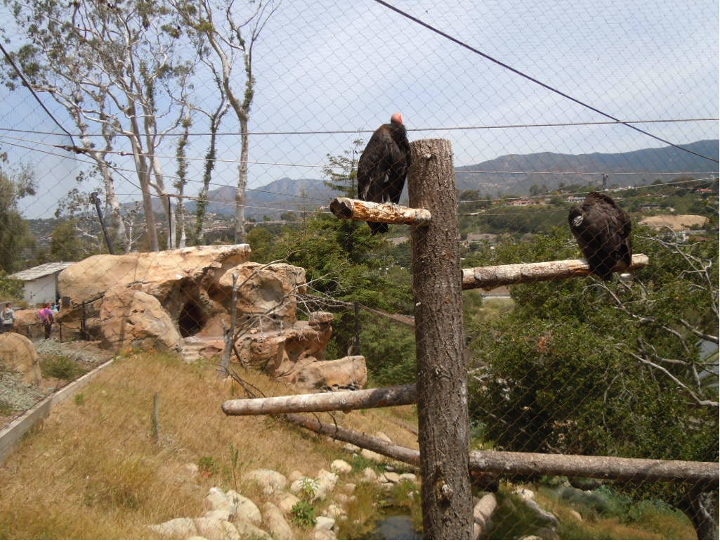 How Another California Zoo Does Conservation | Save Knowland Park - Oakland Zoo California Trail Map