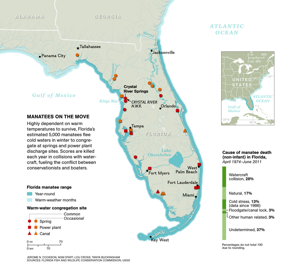 Manatee Invasion! – National Geographic Education Blog - Map Of All Springs In Florida