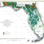 Map Of Florida Showing The Distribution Of The Pine Forests, 1881 Ad   Map Of S Florida