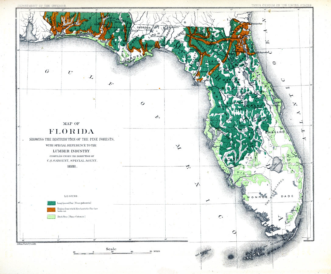 Map Of Florida Showing The Distribution Of The Pine Forests, 1881 Ad - Map Of S Florida
