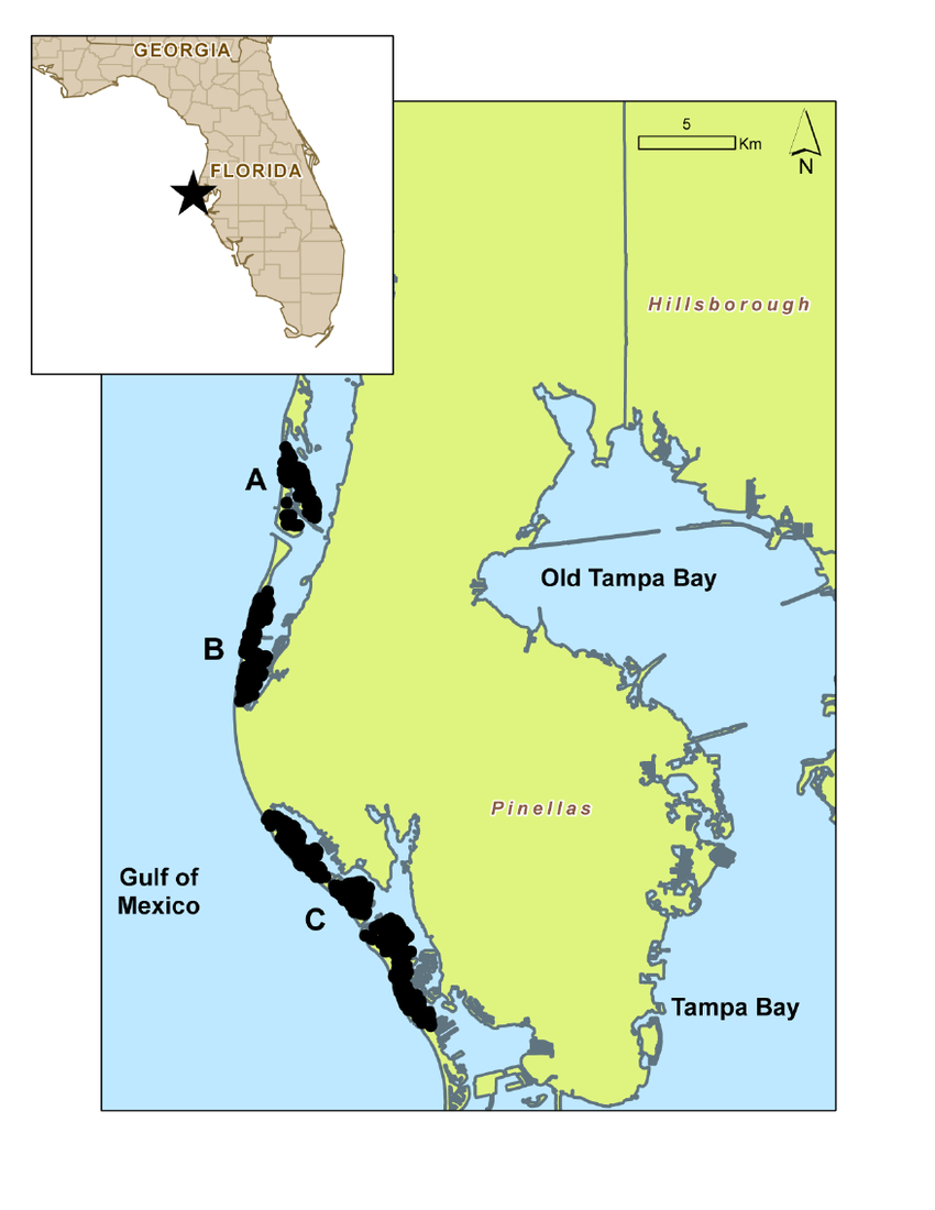 Map Of Study Area (Pinellas County Barrier Islands)   Download - Florida Gulf Islands Map