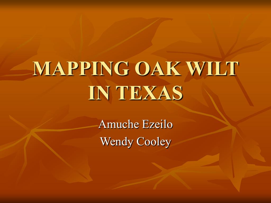 Mapping Oak Wilt In Texas - The University Of Texas At San Antonio - Oak Wilt Texas Map