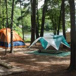 Martin Creek Lake State Park — Texas Parks & Wildlife Department   Texas State Parks Camping Map