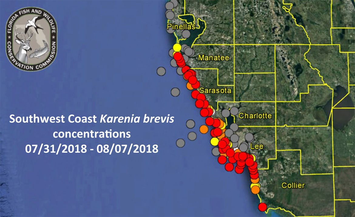 No Red Tide On Pinellas County Beaches As Of Aug. 8 | Pinellas - Clearwater Beach Florida On A Map
