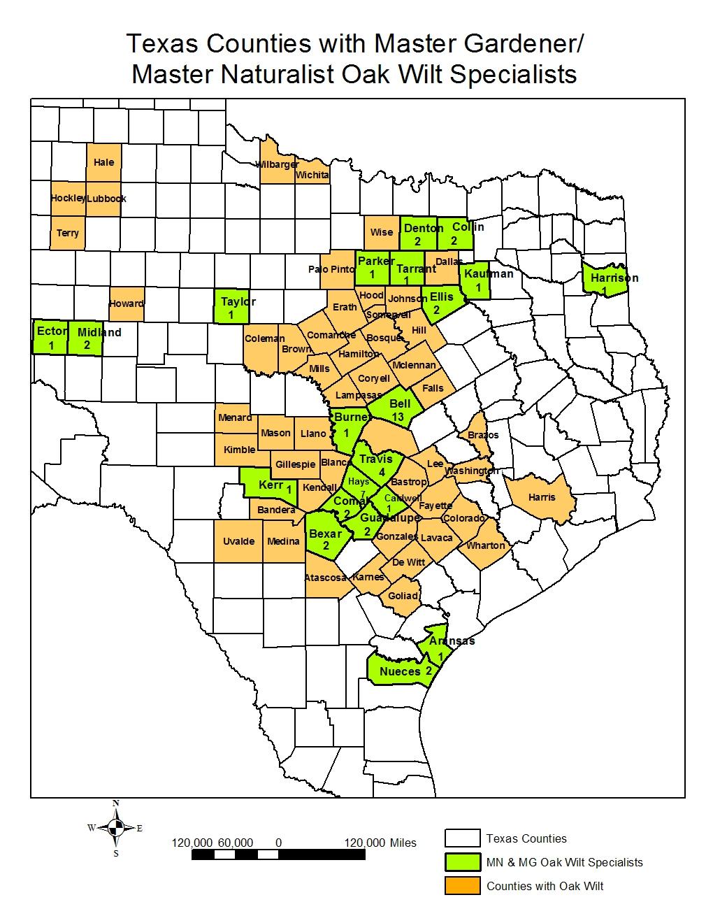 Oak Wilt Identification | Www.topsimages - Oak Wilt Texas Map