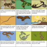Python Snakes   Reproduction, Habitat And Ambushing Tactic   Florida Snake Problem Map