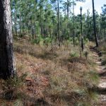 Top 10 Hiking Trails In Florida | Visit Florida   Florida Hiking Trails Map