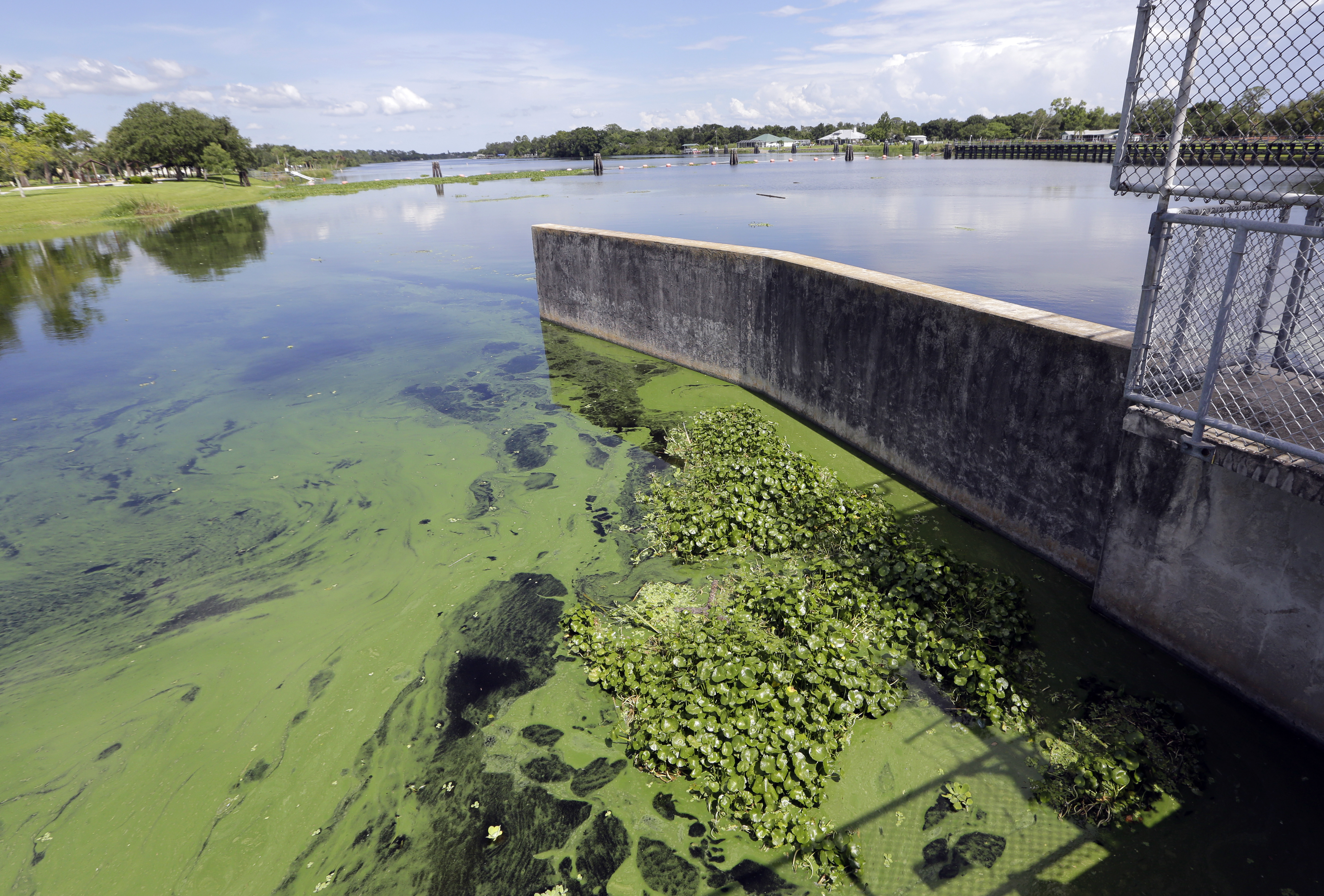 Toxic Blue-Green Algae Plagues South Florida's Waterways; Governor - Toxic Algae In Florida Map