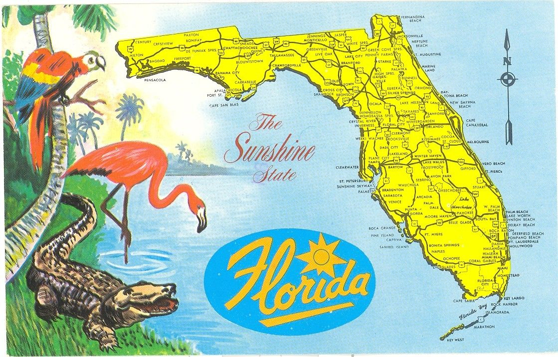 Vintage Florida Postcard - Detailed Map Sunshine State Parrot - Alligators In Florida Map