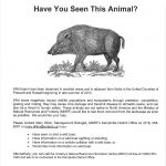 Wild Boars In Ontario – The Wilds Of Ontario   Wild Hogs California Map